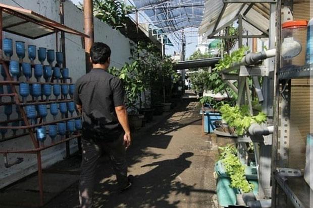 Anies Pamerkan Inovasi Warga Petojo yang Menyulap Gang Kecil Jadi Urban Farming