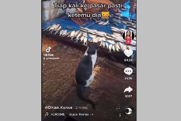 Kucing Berakhlak Ini Pilih Menunggu Dibanding Mencuri Ikan, Netizen Dibuat Kagum