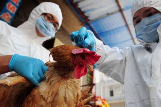 Pandemi Covid-19 Belum Usai, China Laporkan Wabah Flu Burung H5N8
