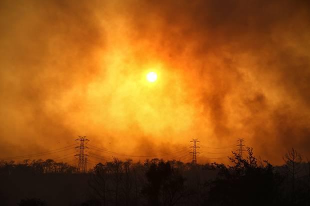 Tiga Tewas Dalam Kebakaran Hutan di Turki