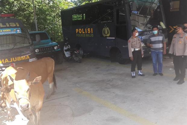 Polres Wajo Tangkap Komplotan Pencuri Hewan Ternak