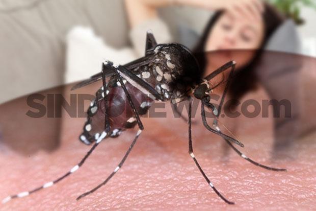 Simak, Kemenkes Bagikan Tips Cegah DBD di Tengah Pandemi Covid-19