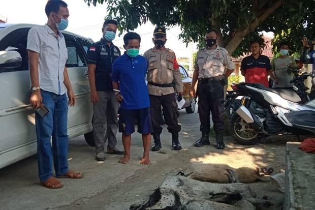 Sembelih 5 Kambing Curian, Maling Spesialis Hewan Ternak Ini Diciduk Polisi