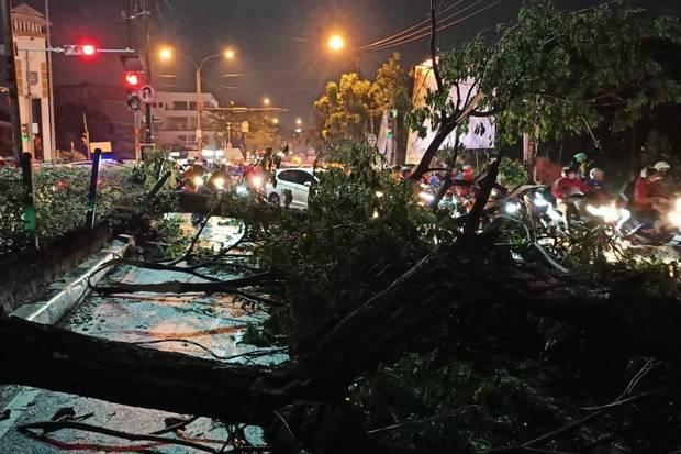 Pohon Tumbang, Jalan Siliwangi Depok Macet Parah