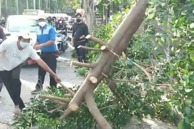Angin Kencang, Pohon Beringin Tumbang Tutup Jalan di Depan RS Islam Pondok Kopi