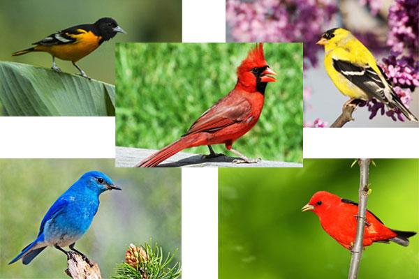 10 Burung Ini Harganya Bikin Geleng-geleng, No.1 Dibanderol Rp30 Miliar