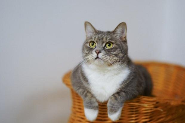 Obat Cacingan Kucing yang Wajib Diketahui, Ini Rekomendasinya!