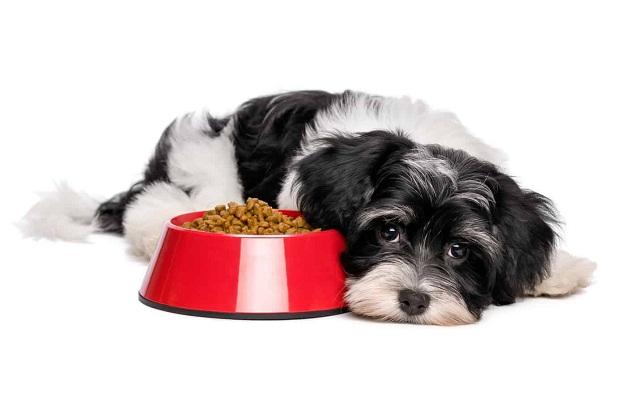 Anjing Sakit Tidak Mau Makan dan Lemas, Begini Cara Mengatasinya!