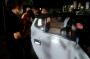 ASN Wajo Terlibat Pencurian Mobil, Tak Berkutik Dibekuk Polisi