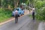 Diterpa Angin Kencang, Pohon Rimbun Tumbang ke Jalan Raya