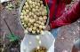 Petani di OKU Selatan Mulai Menikmati Legitnya Panen Buah Duku