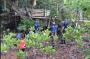 5.000 Pohon Bibit Mangrove Ditanam Lanud Hang Nadim