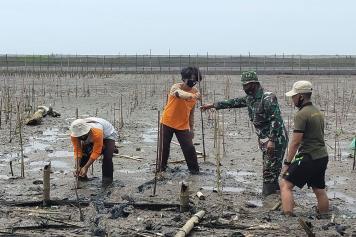 Lanal Yogyakarta Tanam Mangrove di Pantai Baros Bantul