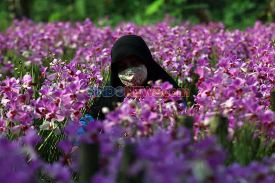 Jelang Hari Raya Idul Fitri, Permintaan Bunga Anggrek Menurun-2