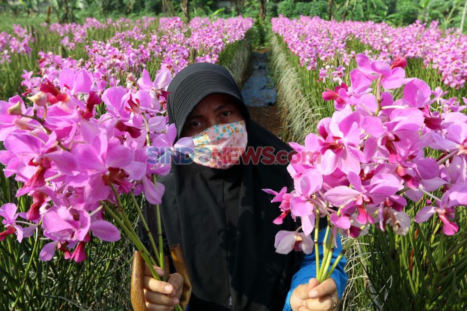 Jelang Hari Raya Idul Fitri, Permintaan Bunga Anggrek Menurun-5