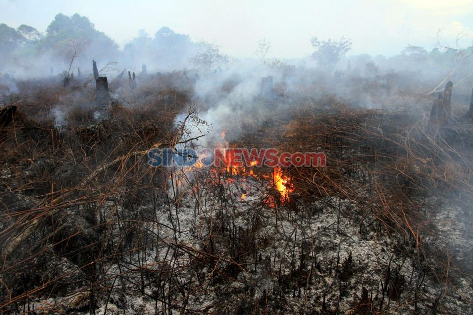 Kebakaran Lahan Gambut di Aceh Barat Meluas-2
