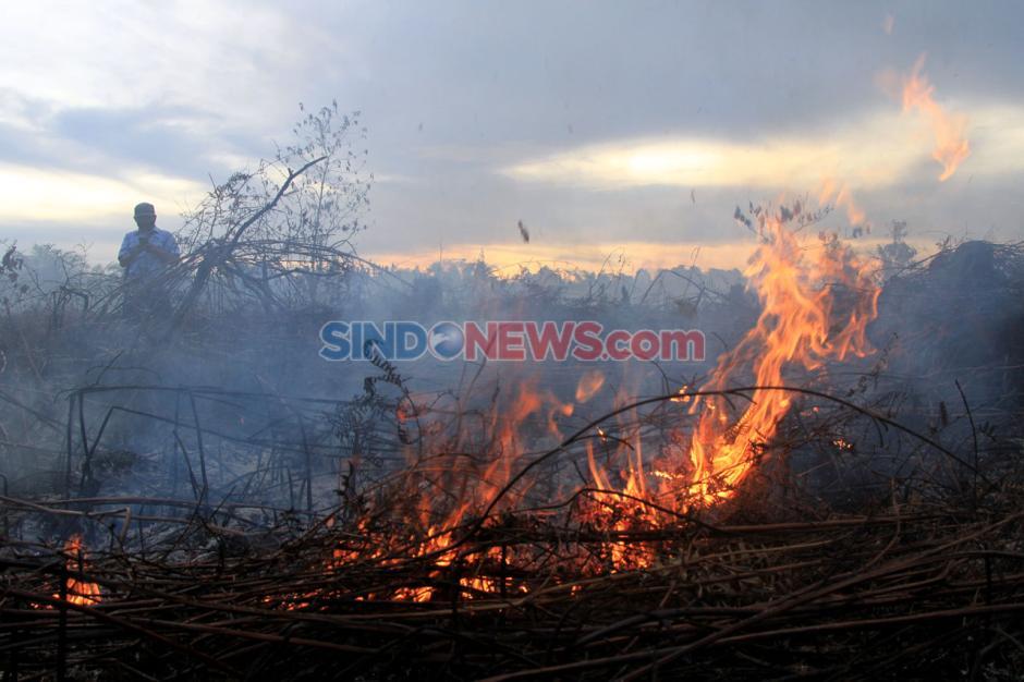Kebakaran Lahan Gambut di Aceh Barat Meluas-1