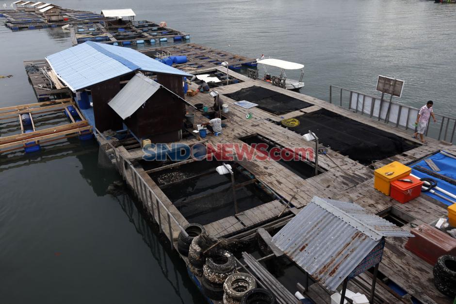 KKP Dukung Budidaya Lobster Keramba di Banda Aceh-1