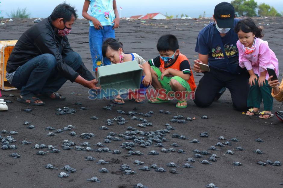 Banyuwangi Sea Turtle Foundation Berhasil Tetaskan Telur Penyu Secara Semi Alamiah-2