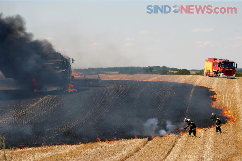 Musim Panas Berlanjut, Ladang Gandum di Prancis Terbakar-0
