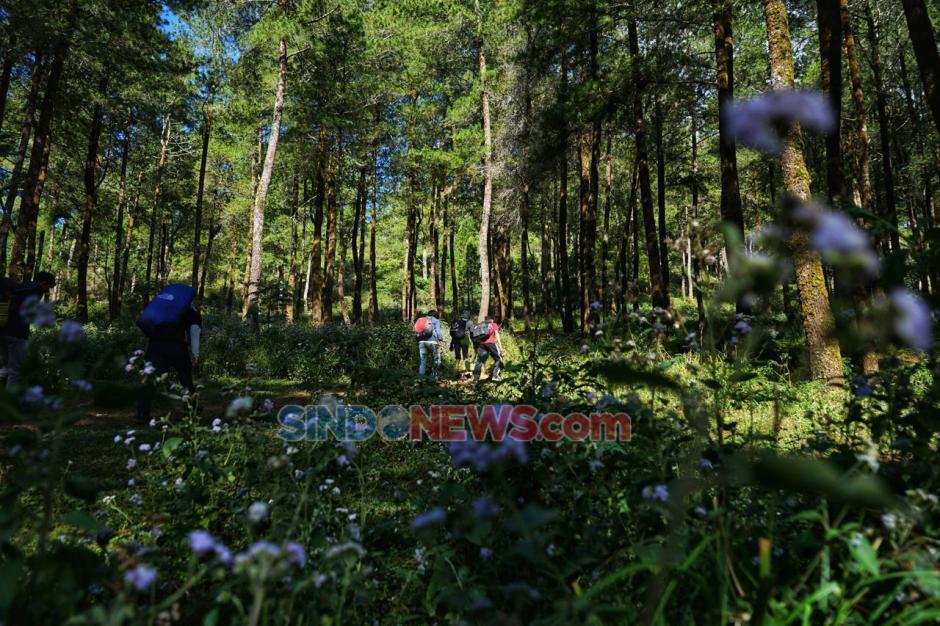 Kemping Akhir Pekan di Hutan Pinus Lembanna-4