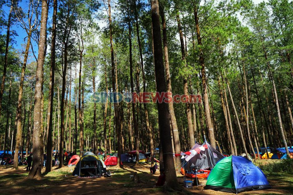 Kemping Akhir Pekan di Hutan Pinus Lembanna-0