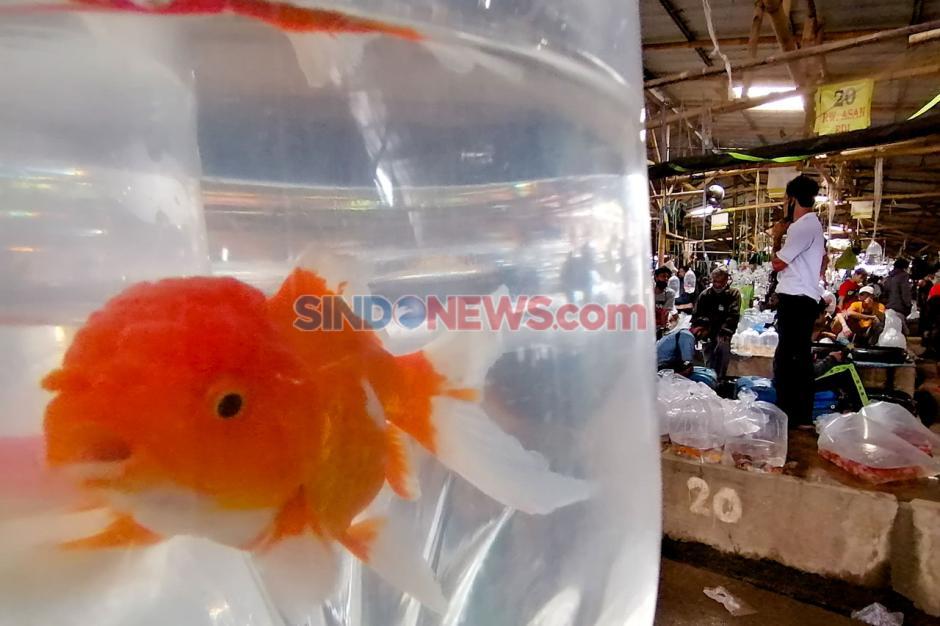 Melihat Aktivitas Pasar Ikan Terbesar di Parung Bogor-3