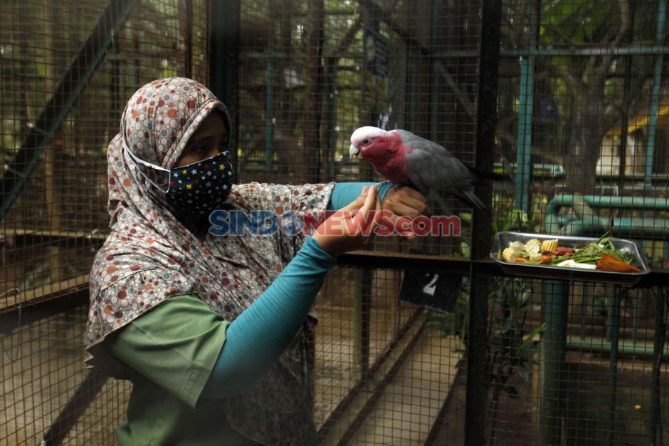 Taman Margasatwa Kembali Buka di Masa PSBB Transisi-4
