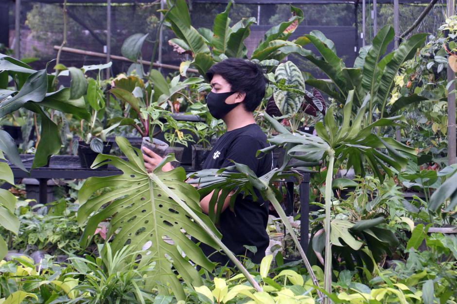 Jualan Tanaman Hias Online Semakin Menggiurkan di Masa Pandemi-1