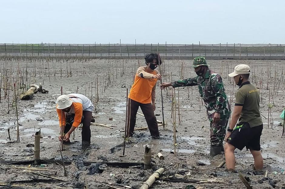 Lanal Yogyakarta Tanam Mangrove di Pantai Baros Bantul-0