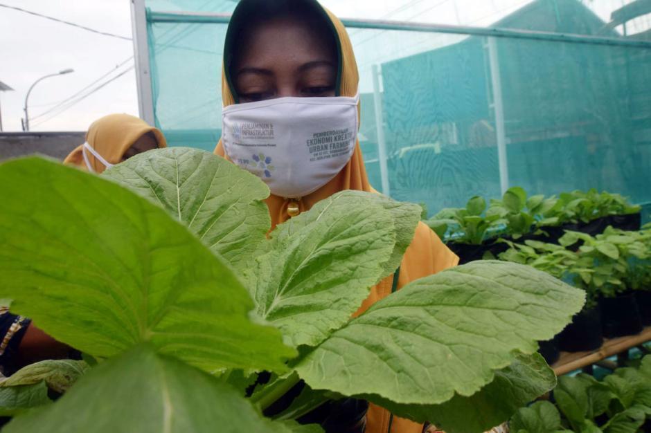 Warga Bambankerep Semarang Nikmati Panen Hasil Urban Farming-3