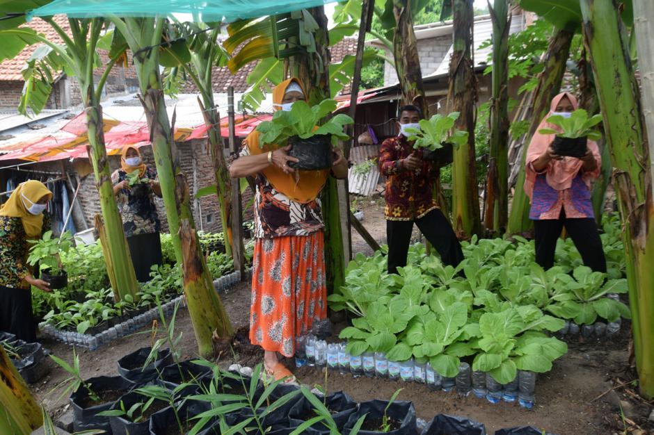 Warga Bambankerep Semarang Nikmati Panen Hasil Urban Farming-1