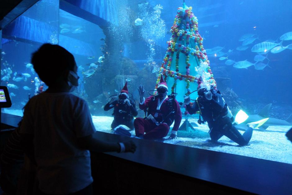 Melihat Pohon Natal dan Santa di Bawah Air-0