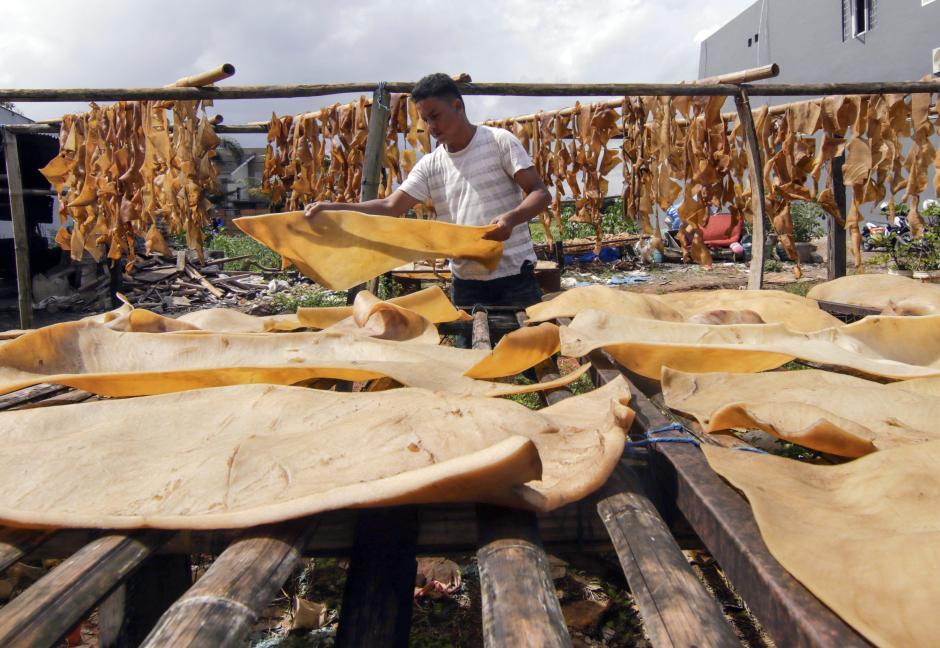 Terkendala Cuaca, Produksi Pengolahan Kulit Sapi di Makassar Menurun-0
