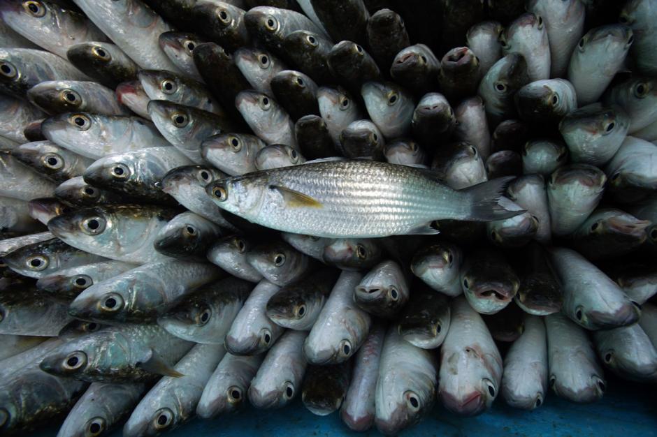 Gelombang Laut Tinggi, Harga Ikan di TPI Paotere Makassar Naik Dua Kali Lipat-6