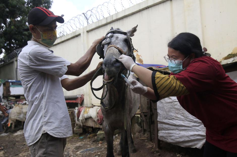 Pelayanan Kesehatan Rutin Kuda di Jakarta-3