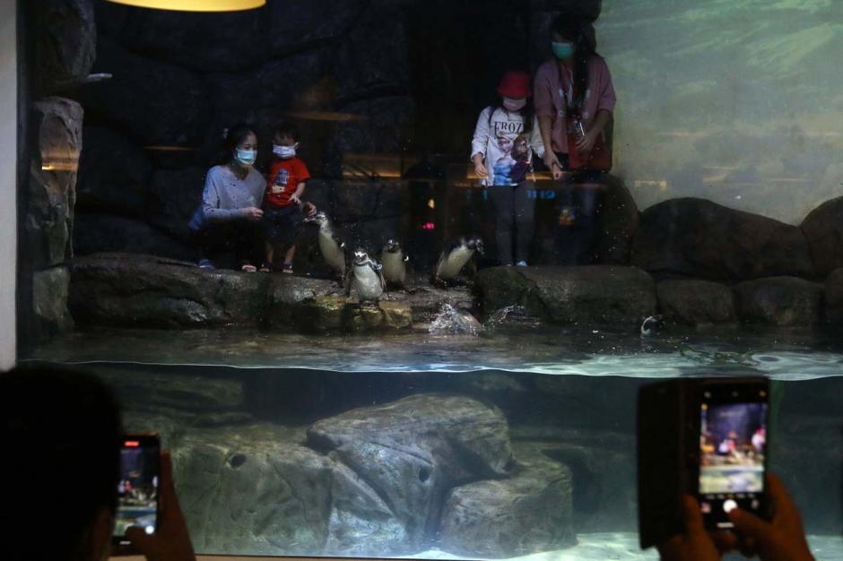 Jakarta Aquarium Safari Hadirkan Atraksi Pinguin di Resto Pingoo-0