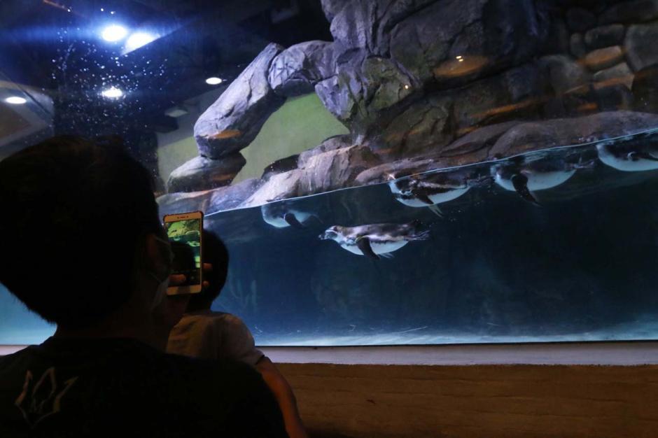 Jakarta Aquarium Safari Hadirkan Atraksi Pinguin di Resto Pingoo-3