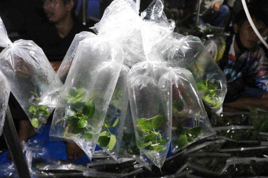 Jalan-Jalan Tengah Malam, Melihat Perburuan Ikan Hias di Pasar Jatinegara-3