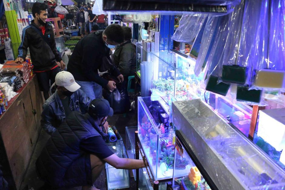 Jalan-Jalan Tengah Malam, Melihat Perburuan Ikan Hias di Pasar Jatinegara-6