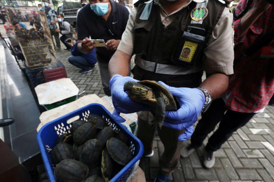 Karantina Pertanian Surabaya Gagalkan Penyelundupan 633 Burung dan Kura-kura Asal Makassar-2