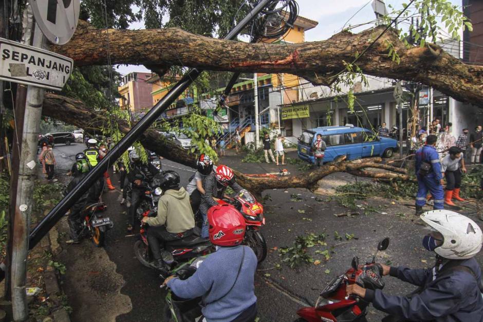 Pohon Tumbang di Jalan Akses UI Depok Timpa Sejumlah Kendaraan-0