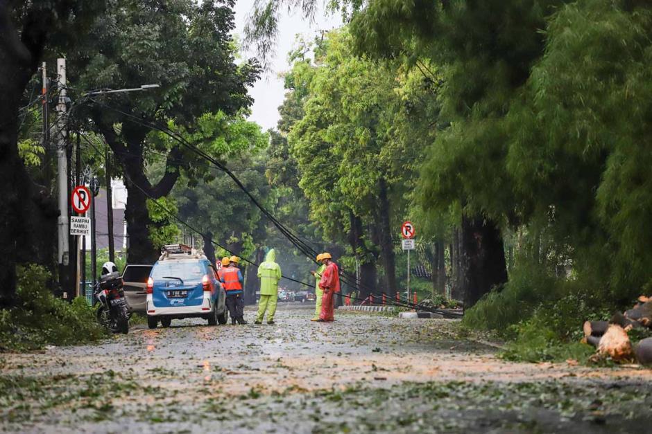 Pohon dan Tiang Listrik Ambruk Akibat Hujan Deras di Hang Tuah Raya-2