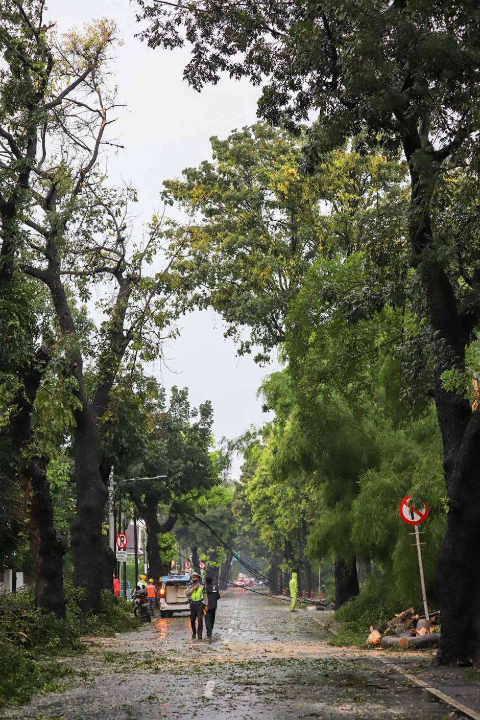 Pohon dan Tiang Listrik Ambruk Akibat Hujan Deras di Hang Tuah Raya-1