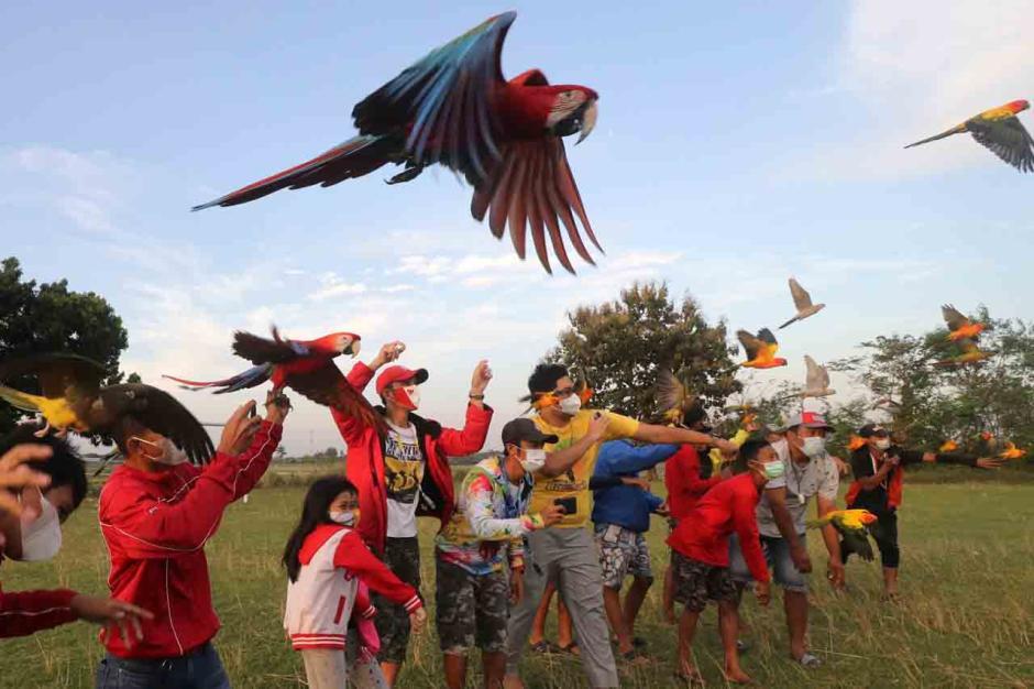 Penggemar Burung Free Flight Gelar Silaturahmi Antar Anggota-0