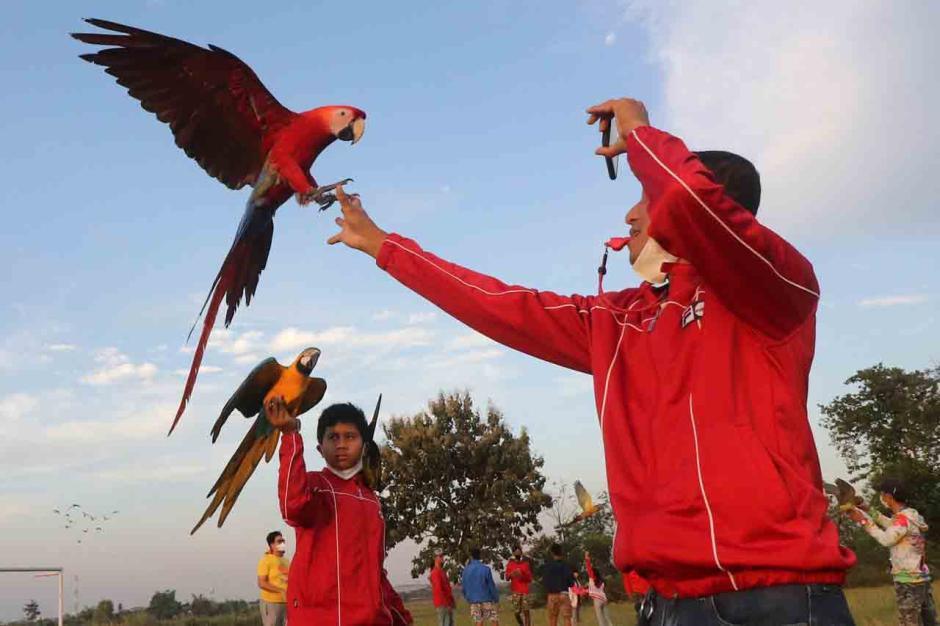 Penggemar Burung Free Flight Gelar Silaturahmi Antar Anggota-1
