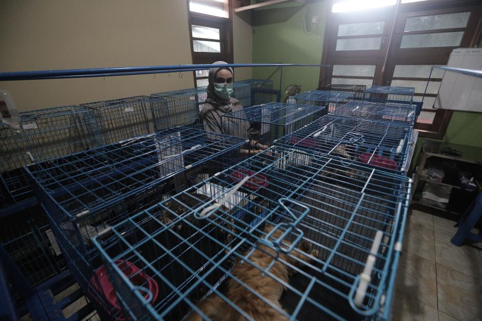 Jasa Penitipan Hewan Peliharaan Turun Dratis Imbas Larangan Mudik-3