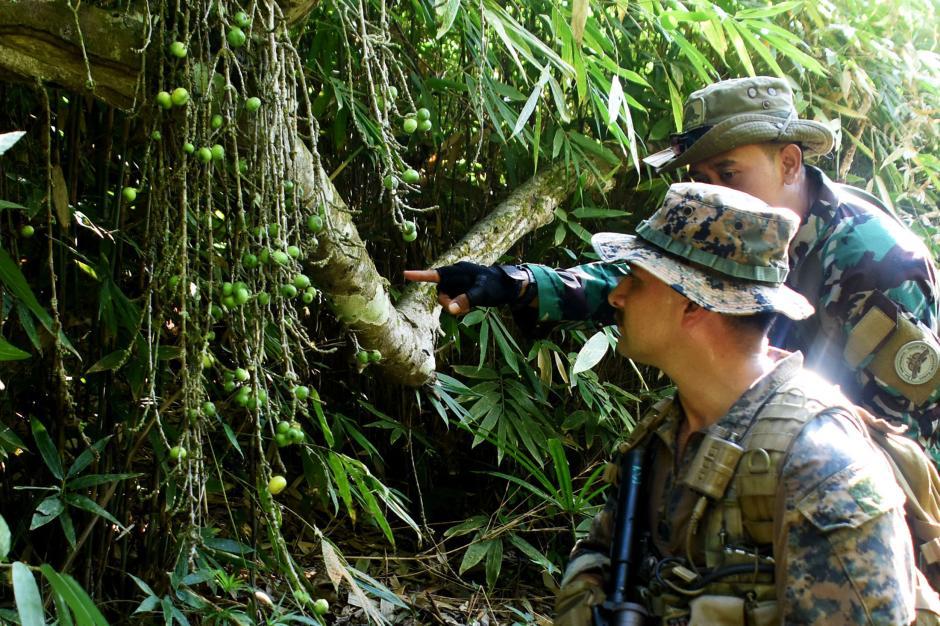 Makan Hewan Buas dan Tanaman, Begini Cara Marinir Indonesia dan Amerika Bertahan Hidup di Hutan-3