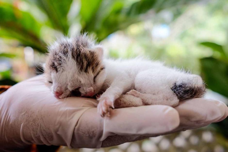 Memiliki Dua Wajah, Anak Kucing Unik ini Diberi Nama Juna Juni-2