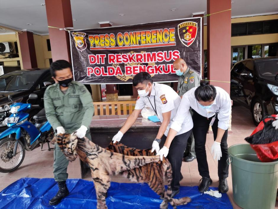Miris, Kulit dan Tulang Harimau Sumatera Ini Dijual Seharga Rp80 Juta-2